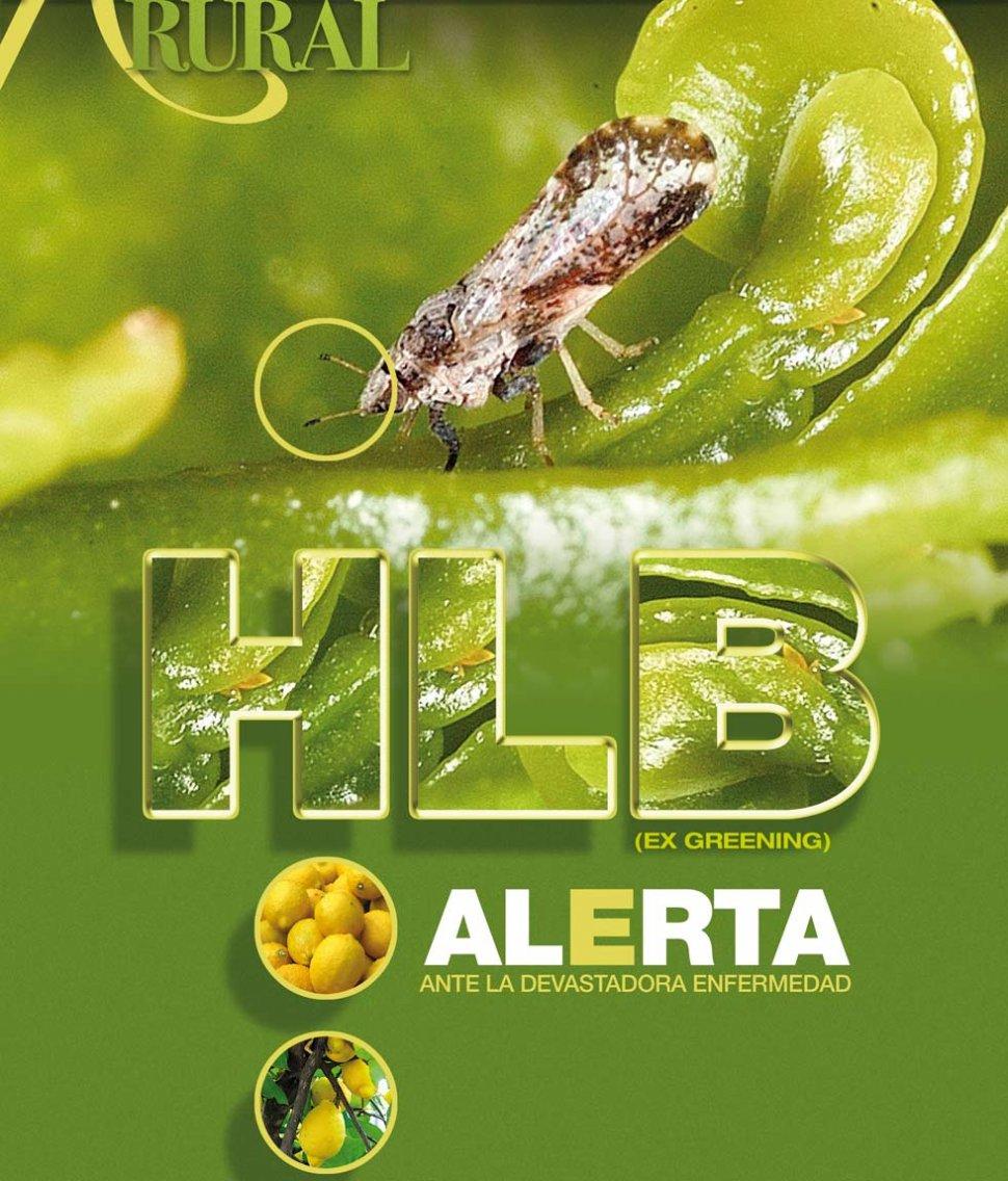 Hlb ex greening alerta ante la devastadora enfermedad for Enfermedades citricos fotos