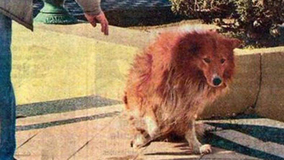 Murió el perro que vivió 9 años junto a la tumba de su am