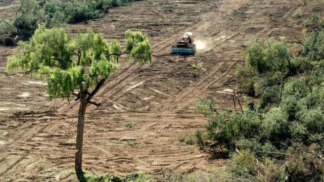 La protección de bosques está cada vez más desfinanciada