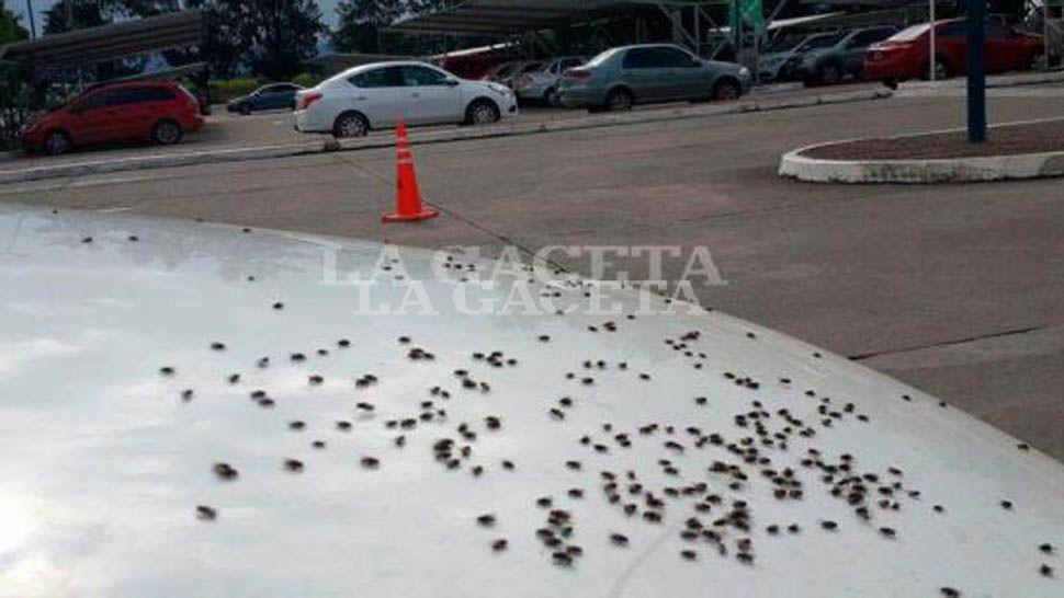 Con el calor y la humedad moscas mosquitos y hormigas - Soluciones para mosquitas de la humedad ...