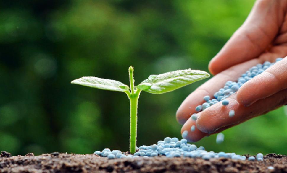 Snap rotaciones de cultivo en agricultura ecol gica for Rotacion cultivos agricultura ecologica