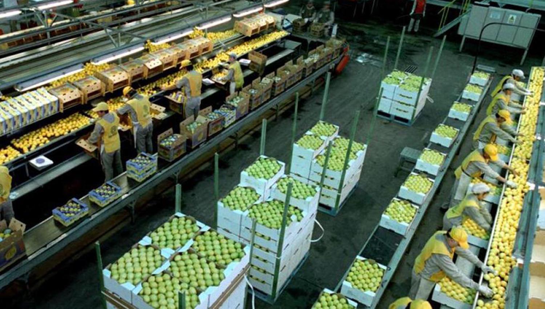 Empresa argentina acuerda compra de productora peruana de frutas Agrícola Hoja Redonda
