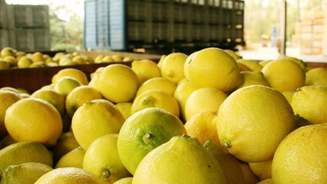 Argentina exportará limones a México por primera vez