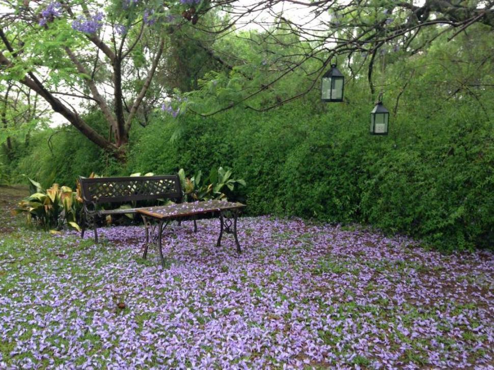 El Garden Club Expondr Plantas De Jard N Y Dise Os