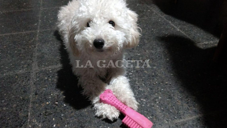 Le dieron licencia para que cuide a su perro — Puro amor