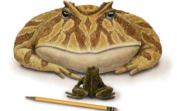 Hallan restos de una rana gigante que comía dinosaurios - LA GACETA ...