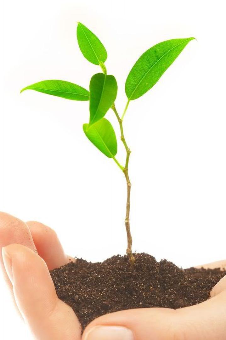 a plantar rboles por el d a de los bosques la gaceta
