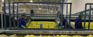 Las exportaciones revivieron a Tucumán Comercio exterior