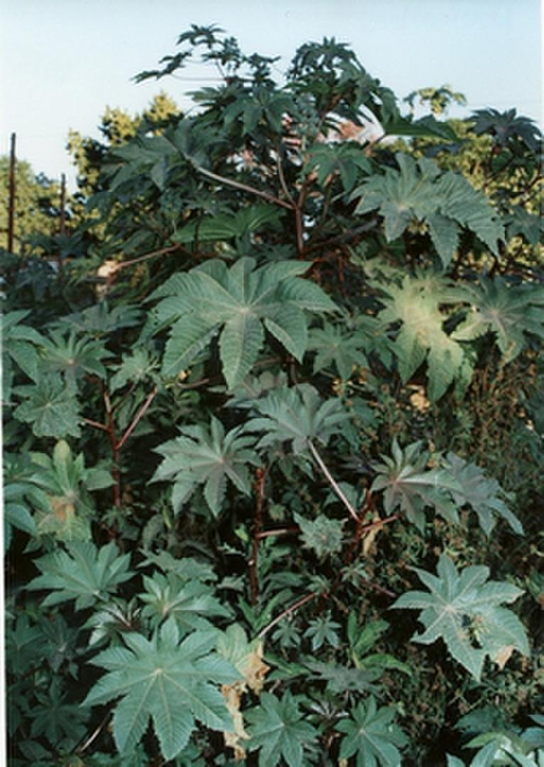 Si en tu jard n crece alguna de estas plantas es mejor for Una estrella en el jardin
