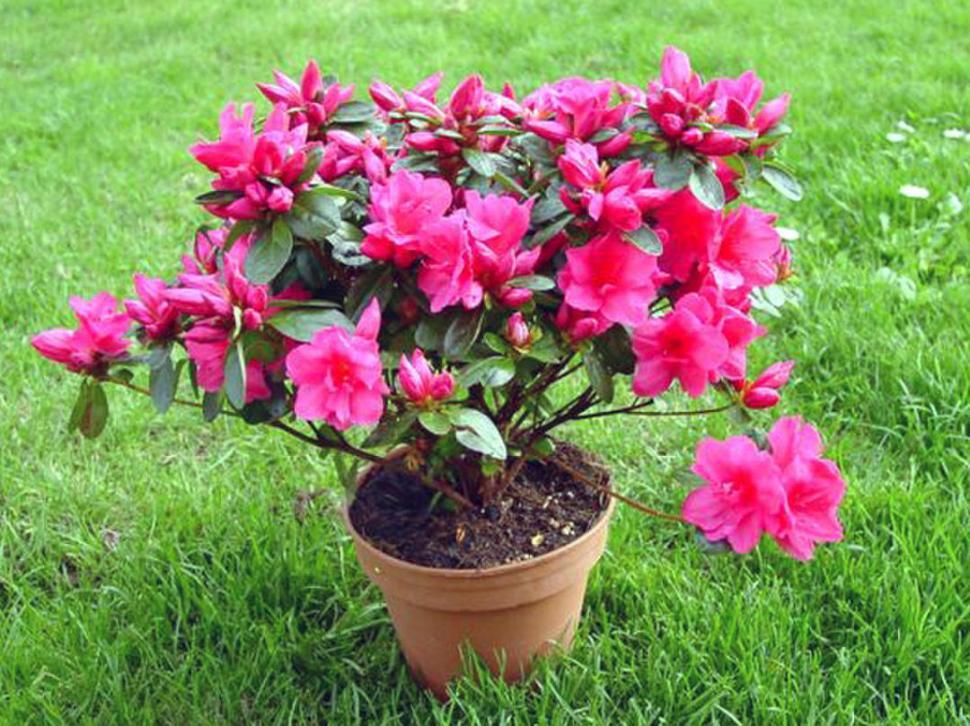 si en tu jardín crece alguna de estas plantas, es mejor que tengas