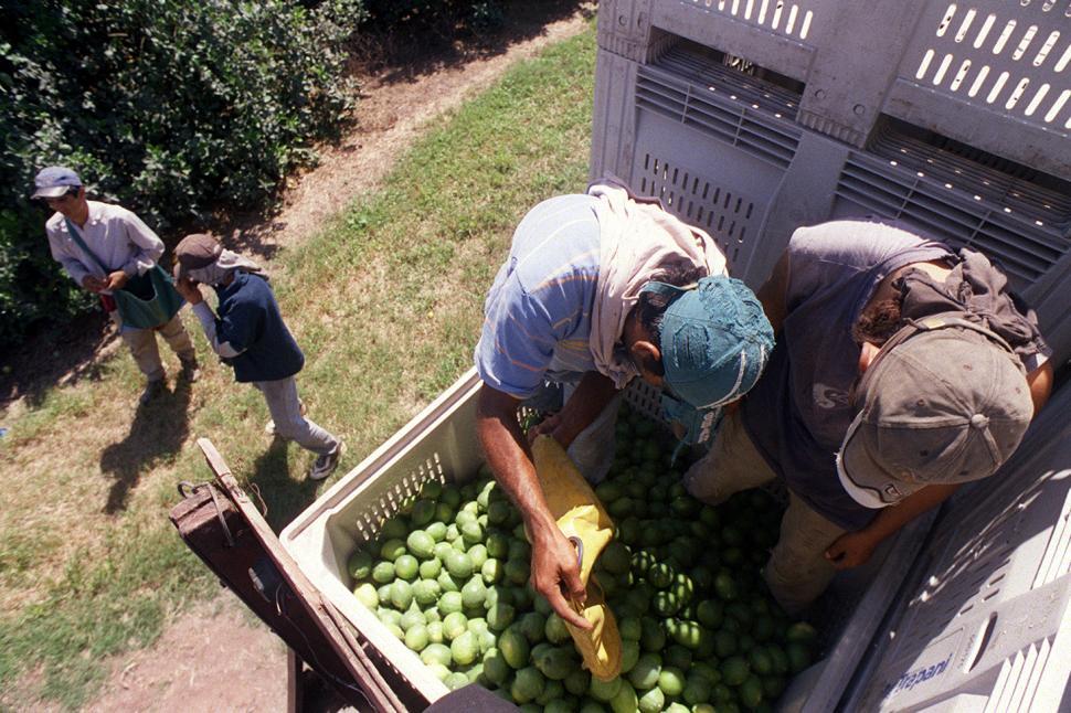 Resultado de imagen para transportistas cosecheros de limon tucuman