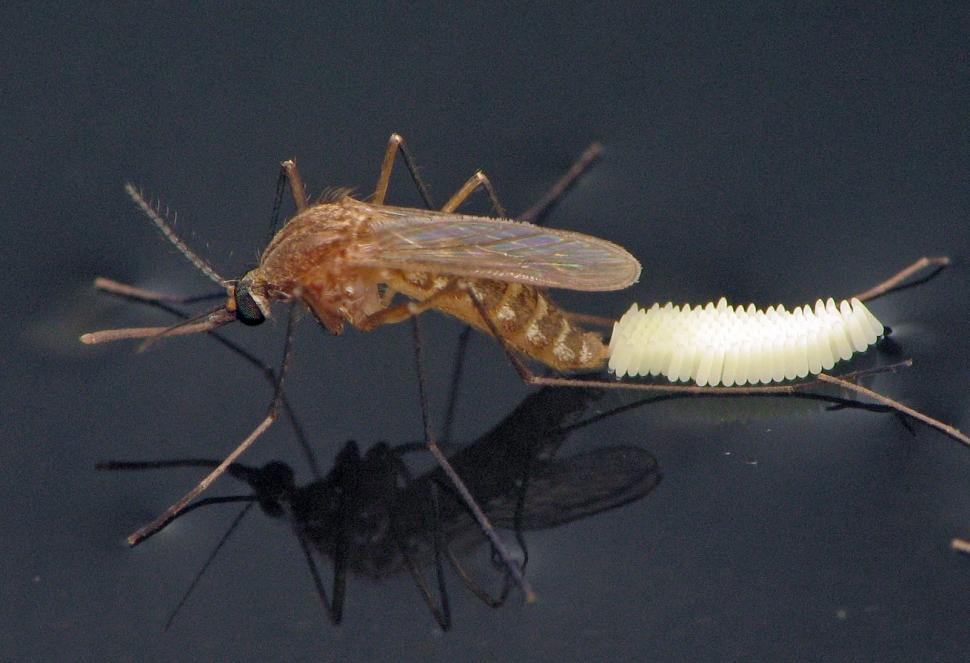 El frío ahuyenta los mosquitos, pero ellos buscan refugio dentro de ...