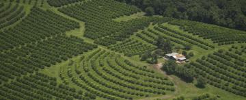 La citricultura perdió a uno de sus pioneros