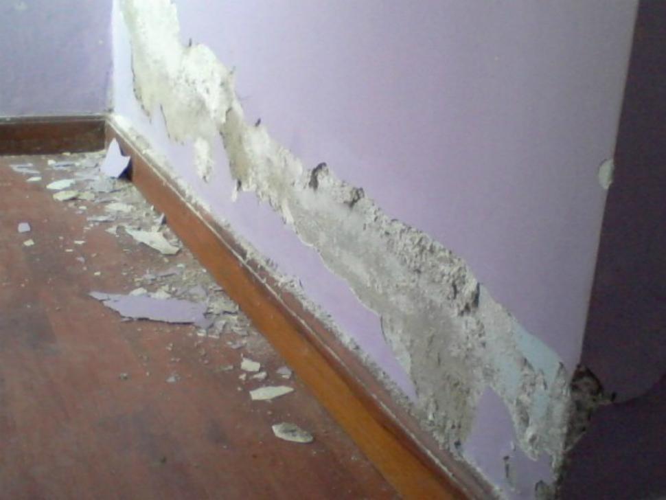 Seis pasos para eliminar el salitre de las paredes la - Tipos de hongos en la pared ...