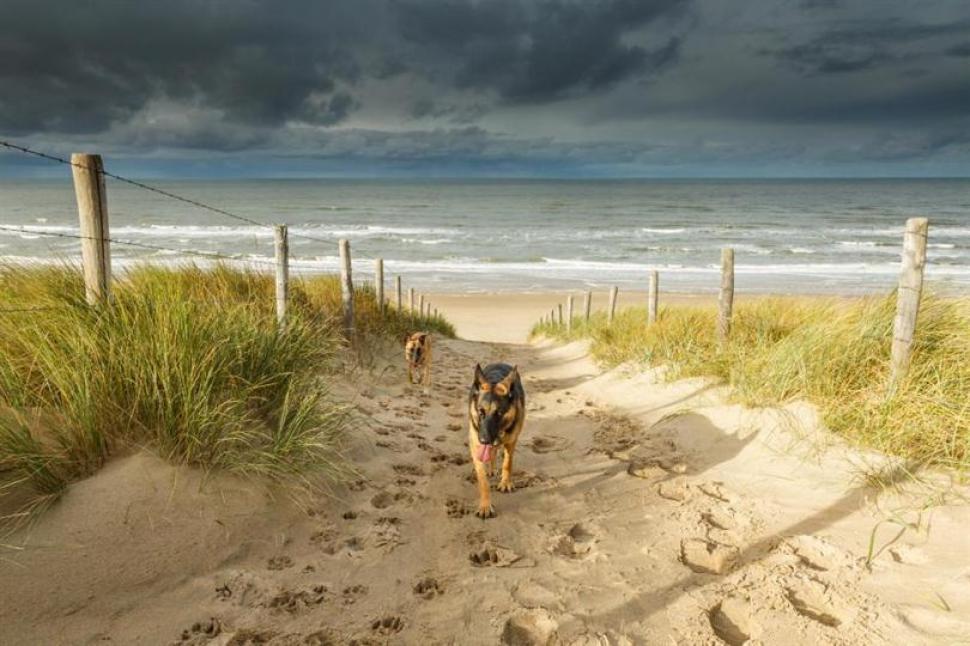 Playa Noordwijk