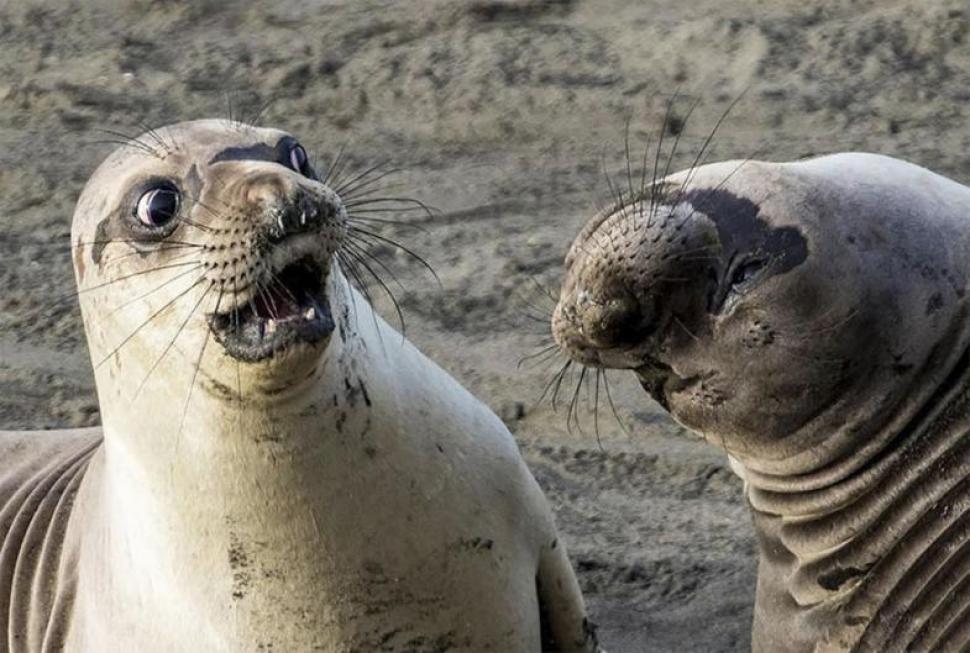 Para reír un rato: diez imágenes del concurso de fotos de los animales más divertidos
