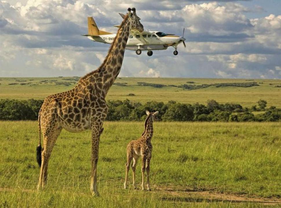 Masai Mara, Kenia. De Graeme Guy