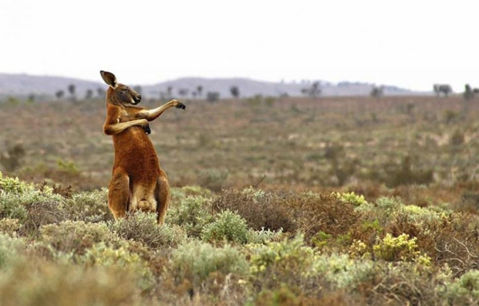 Australia. De Andrey Giljov