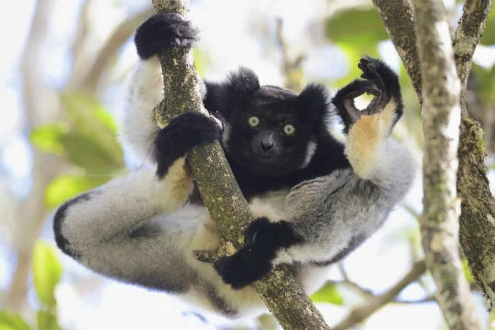 Madagascar. De Yamamoto Tsuneo