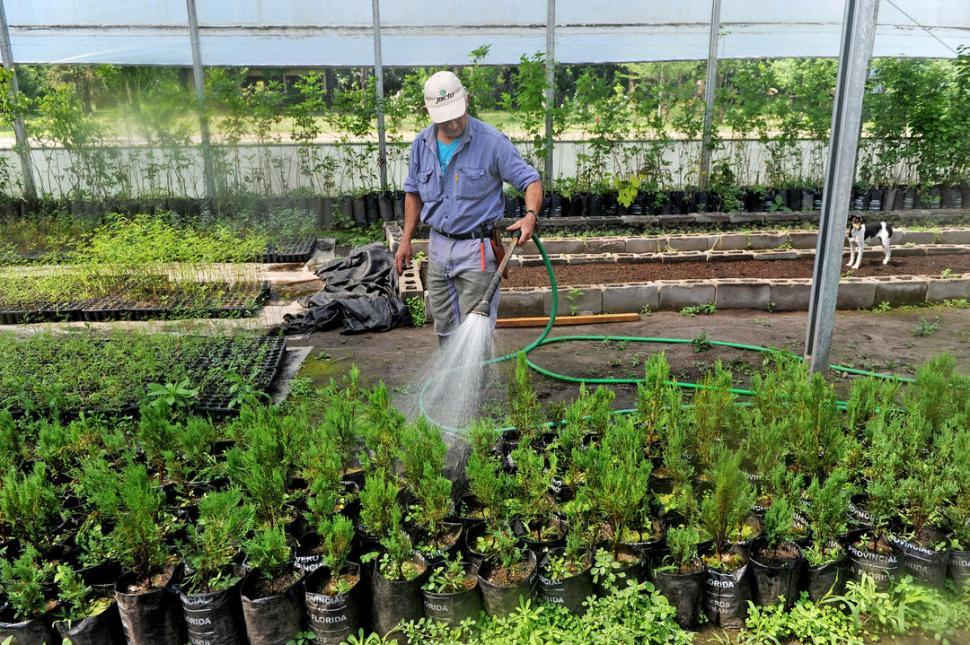 el vivero provincial de la florida plant