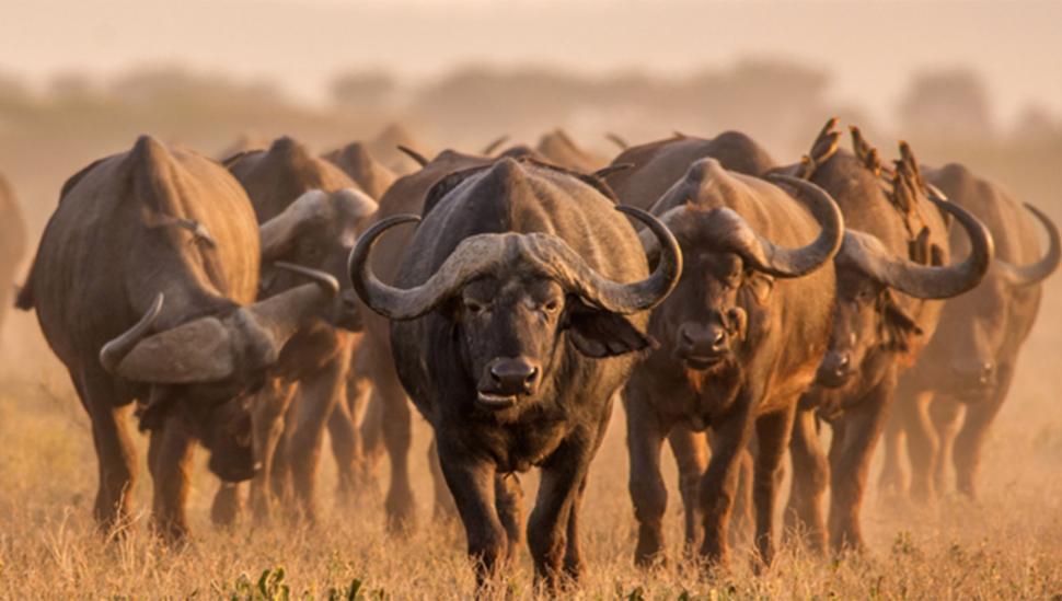 10. Sudáfrica