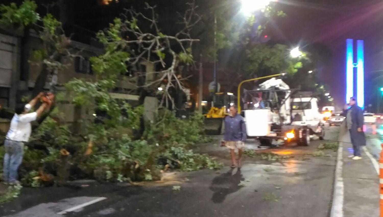 Rehabilitaron el tránsito sobre Mate de Luna al 1.800 después de la caída de un árbol