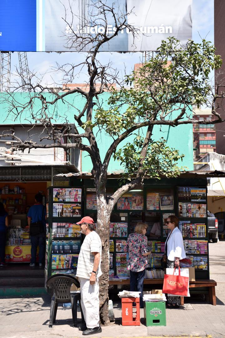 A MEDIAS. En Virgen de La Merced y Santiago hay un naranjo cuyas ramas se ennegrecen.