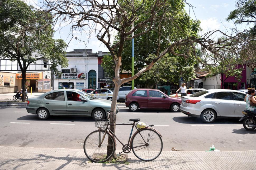 EN AVENIDA SARMIENTO AL 700. Este ejemplar de naranjo ya no dá hoja ni flores. Sólo sirve para que apoyen en él las bicicletas.