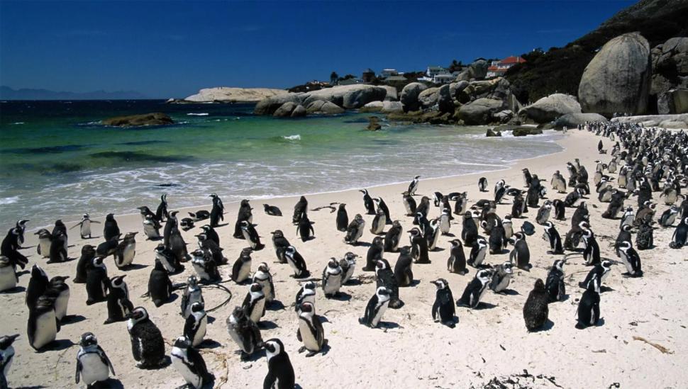 Playa Boulders, Sudáfrica