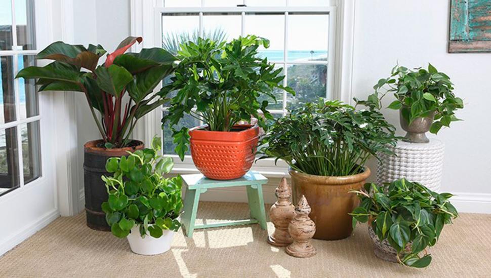 Cinco plantas para desintoxicar y purificar tu departamento
