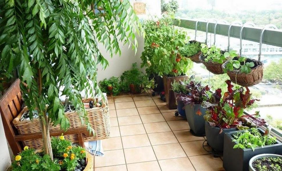 Plantas Para Terrazas. With Plantas Para Terrazas. Finest Decoracin ...