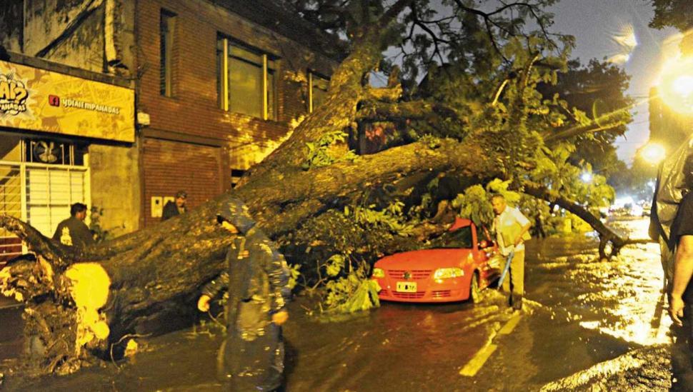 El peor final para un árbol notable que generaba disputa entre vecinos