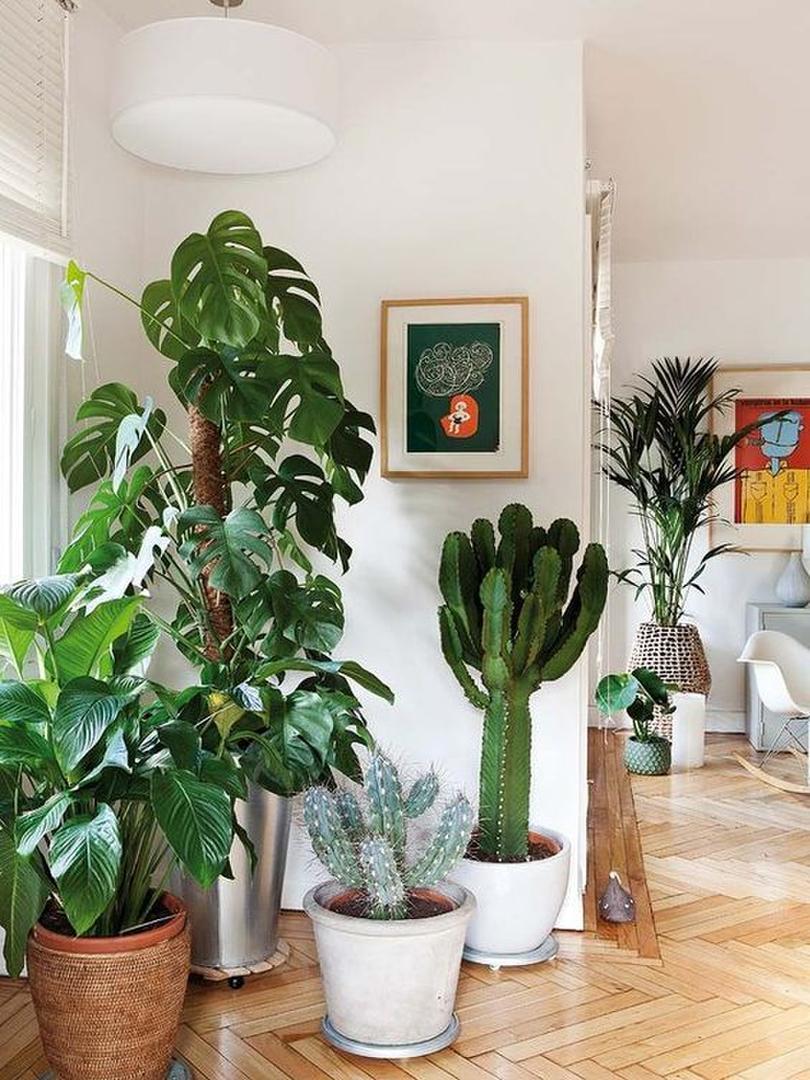El jard n se mete en la casa con plantas altas y hojas for Decoracion con plantas en living
