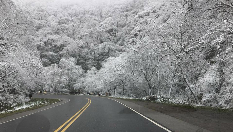 TODO BLANCO. Una mezcla de garrotillo y nieve cubre la vegetación en la zona de los Valles Calchaquíes. FOTOS TOMADAS DE FACEBOOK.COM/HOTEL-MIRADOR-DEL-TAFI