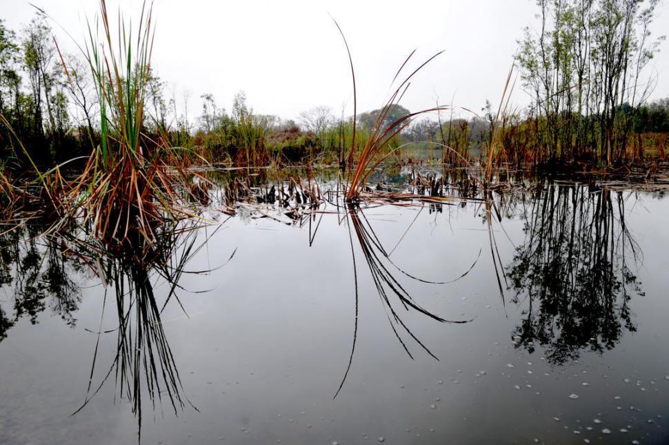 Los yacarés serán parte del paisaje tucumano