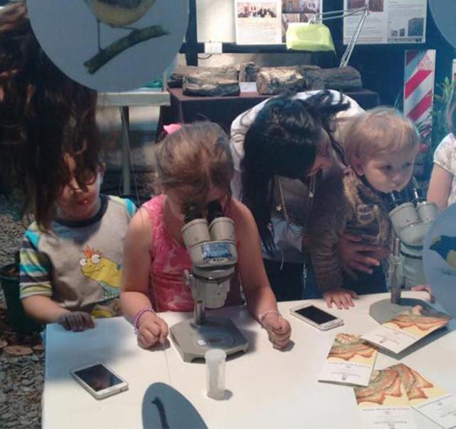 En el Museo Miguel Lillo los niños podrán ser científicos por un día ...
