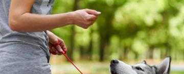 La ciencia confirma que los perros entienden qué les decimos y cómo lo decimos