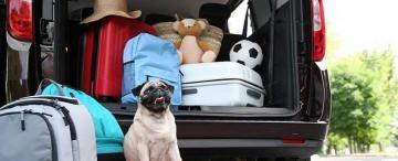 Todo lo que tenés que saber si querés viajar con tu mascota