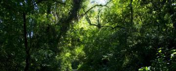 Ciencia y compromiso político, la receta para salvar los bosques tucumanos