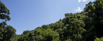 Bosques: ¿los tucumanos podremos alcanzar  los Objetivos de Desarrollo Sostenible?