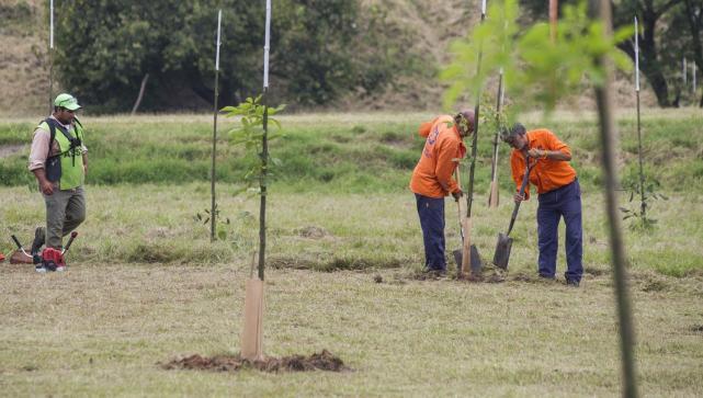 Resultado de imagen para tucuman nuestro jardín forestación