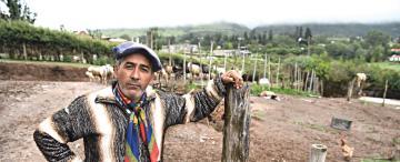 La Fiesta del Queso: con el Patio Criollo, reviven las tradiciones tafinistas