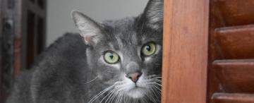 A la Cucha: qué es y cómo funciona el Registro Único de Mascotas