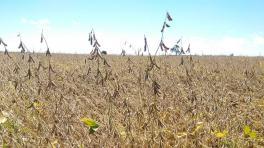 """""""Debemos cosechar con cautela para minimizar las pérdidas de granos"""""""