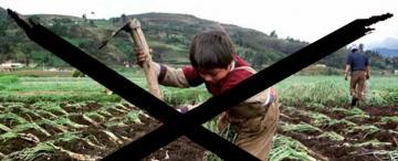 Tucumán lucha contra el trabajo infantil