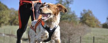 Los beneficios de practicar deportes al aire libre con tu perro