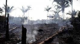 La Amazonia, en llamas: una mirada a largo plazo sobre la deforestación