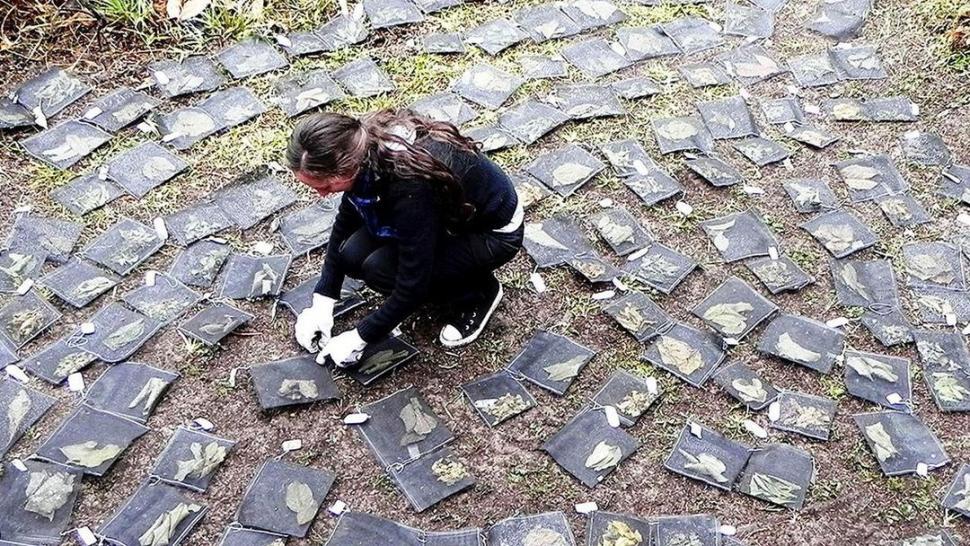 IMPACTO ECOLÓGICO. Fernández mide la descomposición de hojarascas. conicet tucuman
