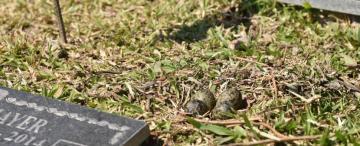 Los cementerios parque: paraísos verdes para las aves