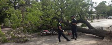 Un árbol cayó sobre un motociclista en la zona del parque 9 de Julio